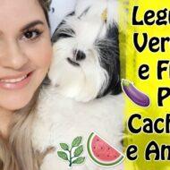 Legumes, Verduras e Frutas Que Seu Cachorro Ou Animal Pode Comer Sem Problemas   Veda14