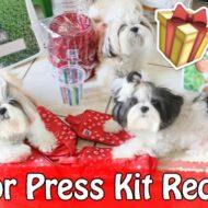 Melhor Press Kit Recebido Pet (Hill's Pet Nutrition) | Veda7