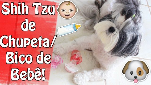 Minhas Shih Tzu (Filhas Pet) de Chupeta:Bico de Bebê de Novo (So Que Hoje Elas Me Enrolaram, rs) | Veda13 - Loi Curcio