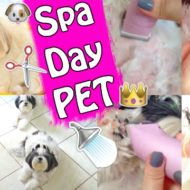 Spa Day Pet Em Casa | Banho e Tosa Nas Minhas Shih Tzu – Cuidados Básicos de Higiene e Beleza Animal | Veda24