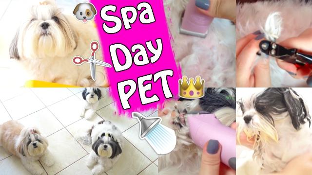 Spa Day Pet Em Casa | Banho e Tosa Nas Minhas Shih Tzu - Cuidados Básicos de Higiene e Beleza Animal | Veda24 - Loi Curcio