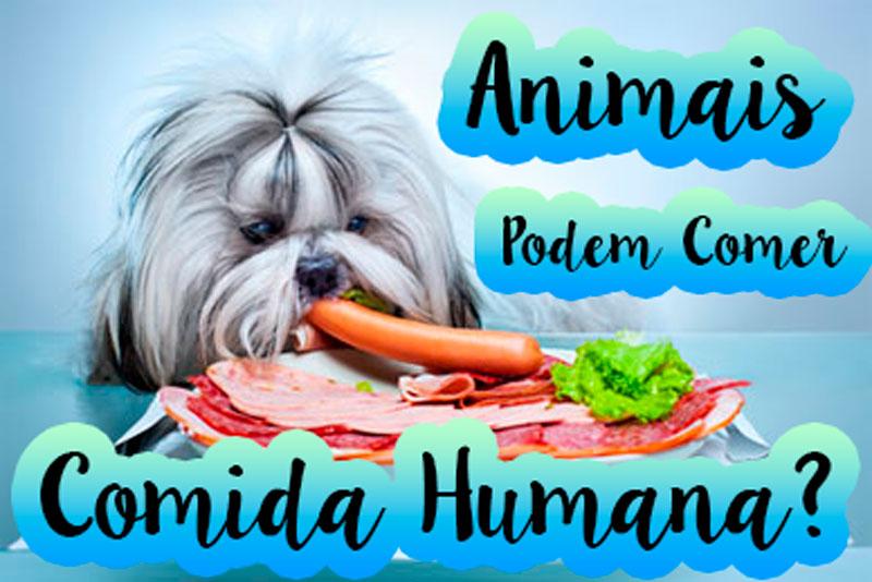 animais-podem-comer-comida-caseira-dicas-para-acostumar-o-pet-comer-racao-loi-curcio
