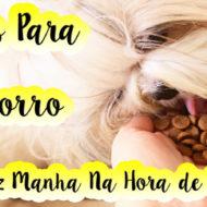 Dicas de Adestramento Para Cachorro Que Faz Manha/Birra/Pirraça Na Hora de Comer