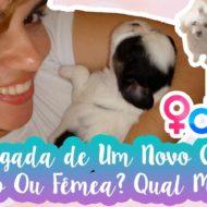 12 Dicas de Como Introduzir Novo Animal/Pet/Cão Na Matilha | Macho Ou Fêmea? Qual Escolher?