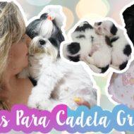 7 Dicas de Como Alimentar A Cadela Grávida | O Que Deve Comer Cachorra Prenha/Gestante