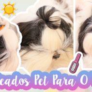 3 Penteados Pet (Para Cachorro) Práticos e Fresquinhos Para O Verão e Dias Quentes