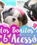 6 Acessórios Para Fazer Penteados Bonitos e Fáceis Em Cães (Cadela e Cachorra)