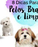 8 Dicas Imperdivéis Para Deixar O Bigode e Pelo do Cachorro Branquinho e Limpo