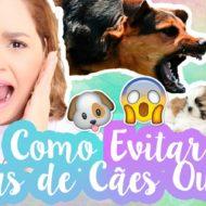 Como Evitar/Prevenir Brigas Entre Cachorros Ou Animais | 7 Dicas Pet Arrasadoras
