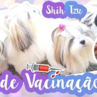 Vlog: Dia de Vacinar Minhas Filhas Pet (Shih Tzu Tomando Vacina V10/Décupla e de Raiva)