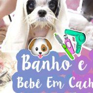 Como Dou Banho e Toso Minhas Shih Tzu | Banho e Tosa Bebê Em Cães/Cachorros #VEDA17