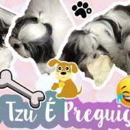 Melly E Sua Determinação Para Pegar O Osso de Suri (Minhas Cachorrinhas Shih Tzu) #Dogsdaloi #VEDA6
