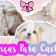 Penteados Para Cachorros: Trança Cruzada e Torcida Para Cadela #VEDA7