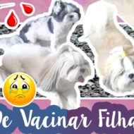 Vlog: Dia de Vacinação das Minhas Shih Tzu (Filhas Pet) | Cães Tomando Vacina de Giardia (Verme) e Tosse (Gripe) #VEDA19